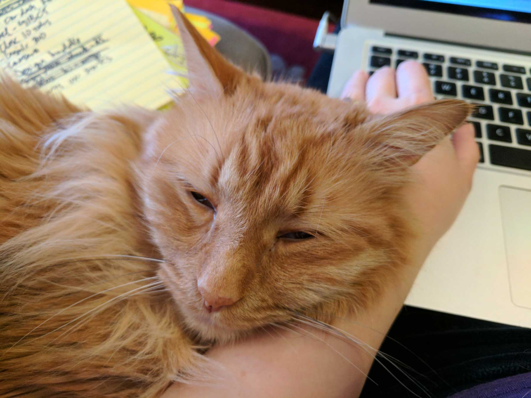 "Koma cat ""helping"" Laura type"